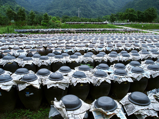 Kagoshima's Black Vinegar – A 200-Year Tradition