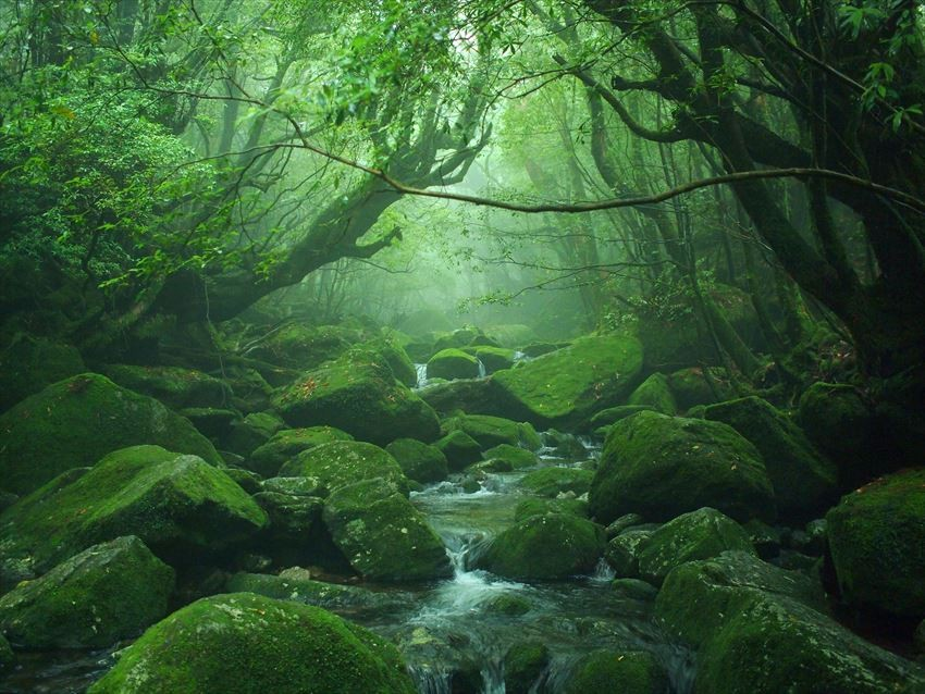 Yakushima – The Underrated Japanese UNESCO World Heritage that Should Be Visited by All Nature Lovers
