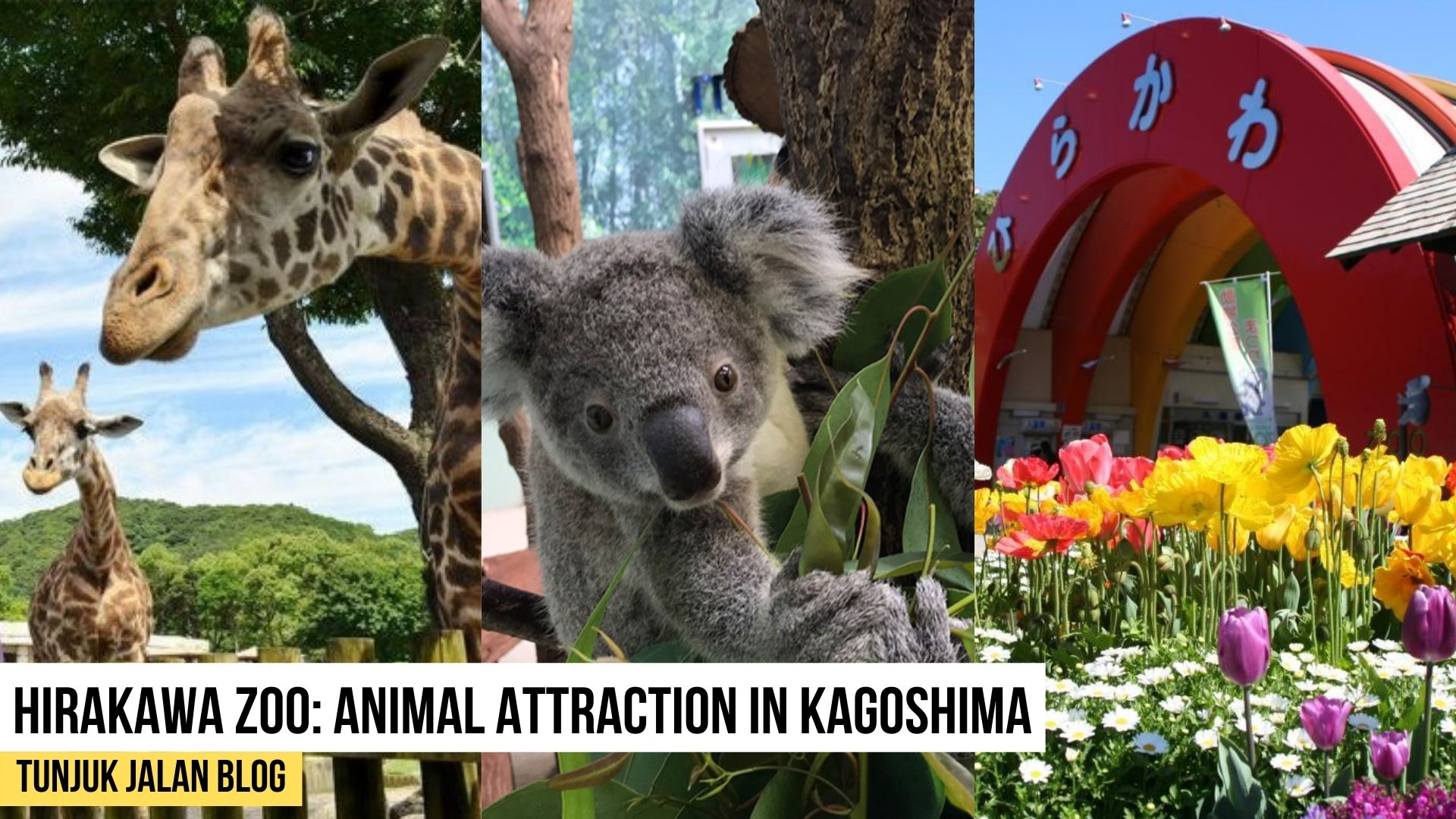 Hirakawa Zoo: Animal Attraction in Kagoshima
