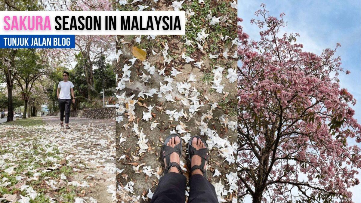 SAKURA In Malaysia 🌸🌸